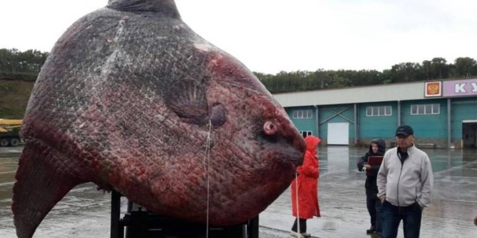 Un poisson de plus d'une tonne, la prise inespérée de ces pêcheurs (PHOTO)