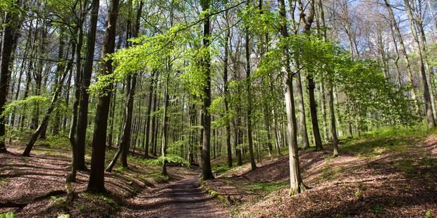 La Forêt de Soignes à la fête ce dimanche - La DH