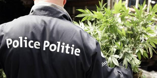 49,75 grammes de cannabis saisis par la zone de police boraine - La DH