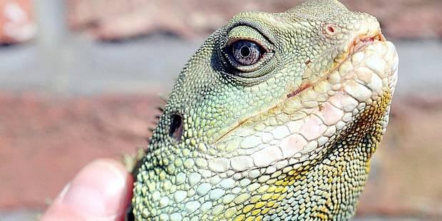 75 % des reptiles domestiques meurent prématurément - La DH