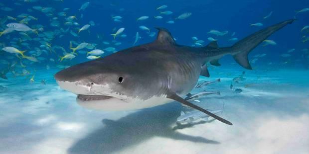 Tué par un requin dans un bain de minuit à Cuba - La DH
