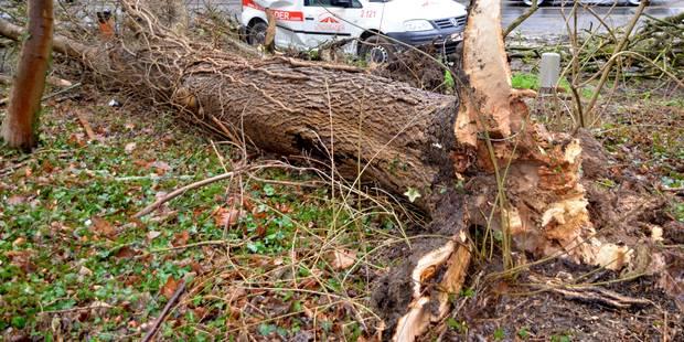 Ittre: Un arbre s'écrase sur une habitation - La DH