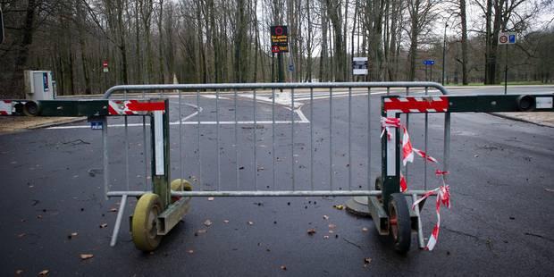 Vents violents: les parcs et bois bruxellois fermés - La DH
