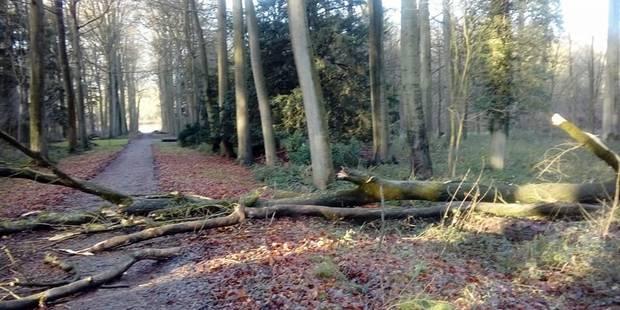 Les vents violents n'ont pas épargné le parc d'Enghien ! - La DH