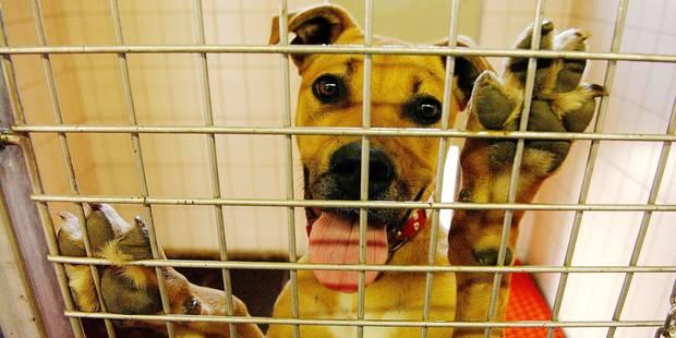 Charleroi : grâce à la SPA, 1.826 chiens ont retrouvé un foyer - La DH