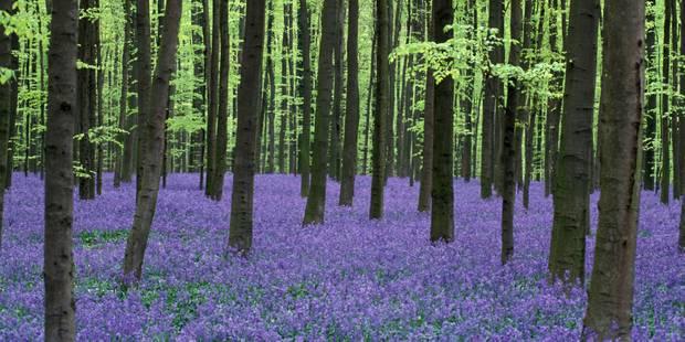 Le CPAS de Bruxelles vend 100 hectares de forêts à la Flandre - La DH
