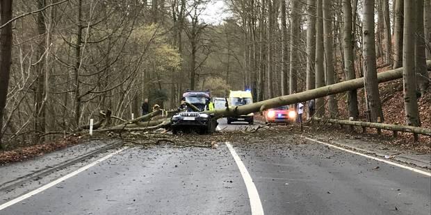 Un arbre tombe sur une voiture à Grez-Doiceau: une dame perd la vie - La DH