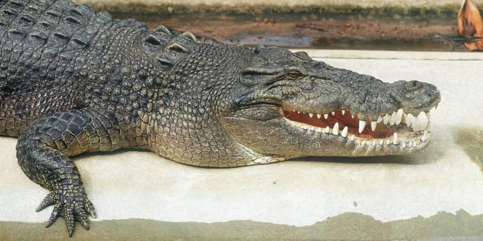 A la recherche d'armes, la police tombe sur un crocodile en Russie
