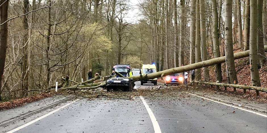Grez-Doiceau: Les arbres au bord des routes font débat