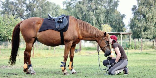 Mons : L'animal comme thérapie pour se sentir mieux - La DH