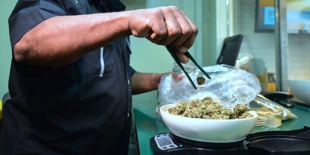 Un demi-kilo de cannabis ! - La DH