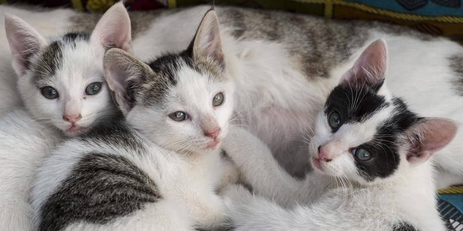 1300 chats enregistrés en trois mois dans la Région bruxelloise