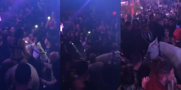 Scandale dans une discothèque à Miami où un cheval a créé la pagaille - La DH