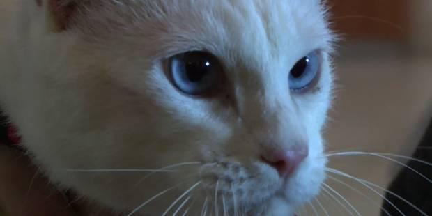 Un chat sourd désigné pronostiqueur officiel du Mondial 2018 - La DH