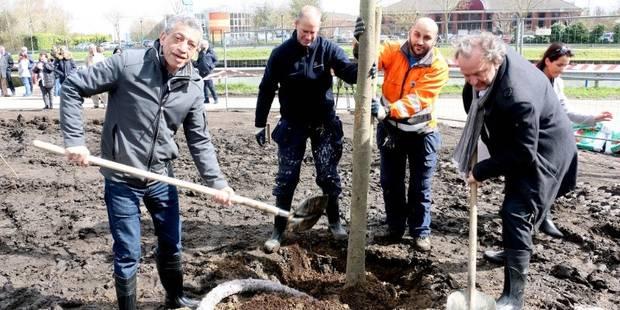 Port de Bruxelles: 25 arbres plantés pour les 25 ans du port - La DH