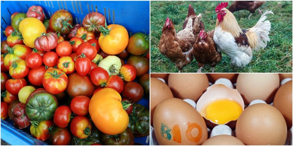 Révolution dans nos assiettes: 9 Belges sur 10 mangent bio ! - La DH
