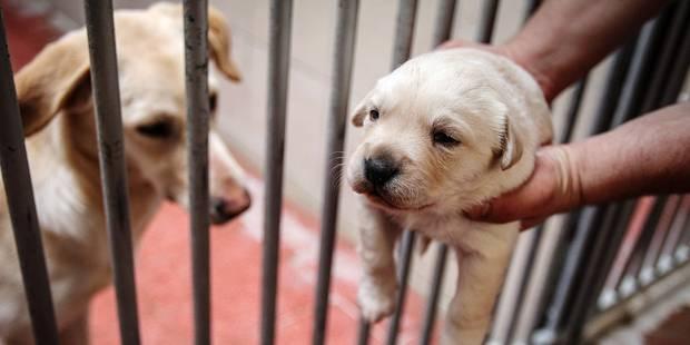 109 chiens abandonnés en mars, le refuge est saturé ! - La DH