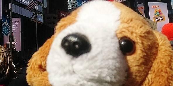 Une Américaine a perdu son chien porte-bonheur - La DH
