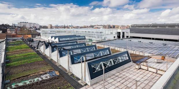 Anderlecht: 4.000m2 de cultures sur le toit des abattoirs - La DH